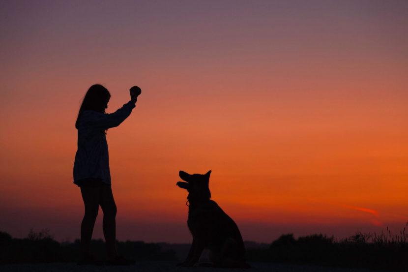 Garde d'animaux à domicile et pet sitting pour chien, chat, hamster, poisson, NAC