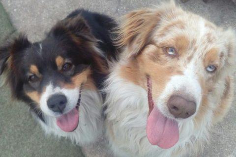 Dog-sitting et garde de chiens en Médoc