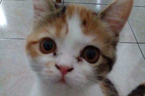 pet-sitter-pour-chat-macau