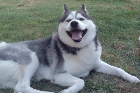 Garde de chien pour les vacances