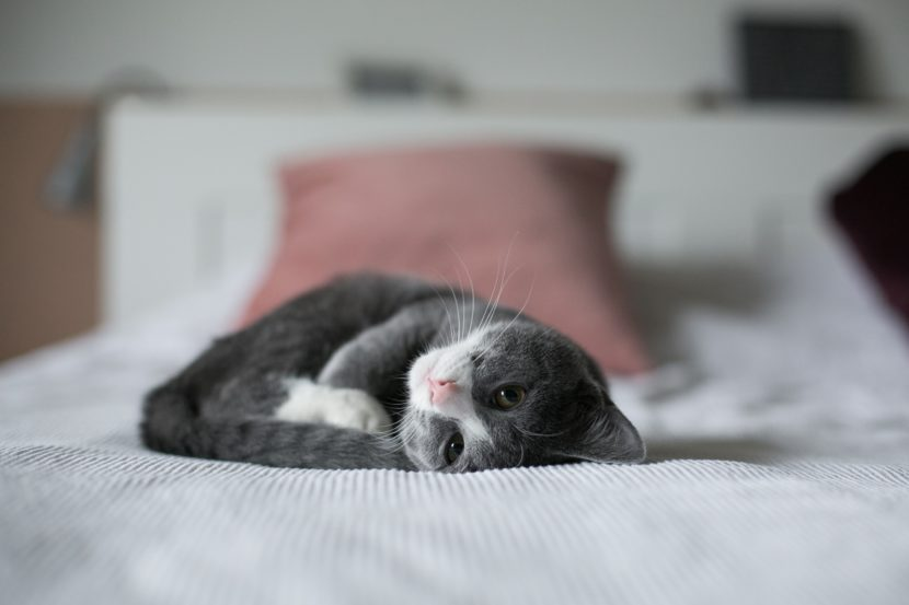 Pet-sitting_animaux