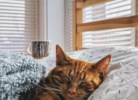 Avoir un chat ou un chien en appartement