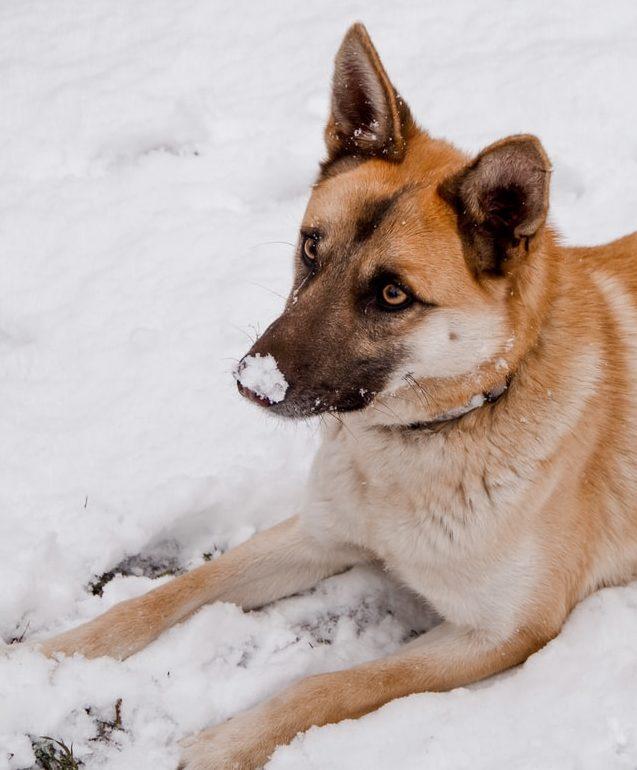 Protéger-ses-animaux-de-compagnie-en-hiver